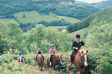 Horse Riding & Pony Trekking Abergavenny