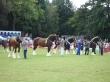Abergavenny Shire & Miniature Horse Show